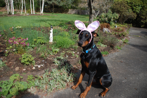 Barkis the Easter-dobe