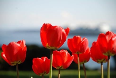 tulips, sound, ferry...ahhh...