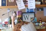 susan wiggs writer on deadline